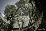 The Botanical gardens of Valencia I DSC_0270-x