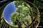 The Botanical gardens of Valencia II DSC_0275-x